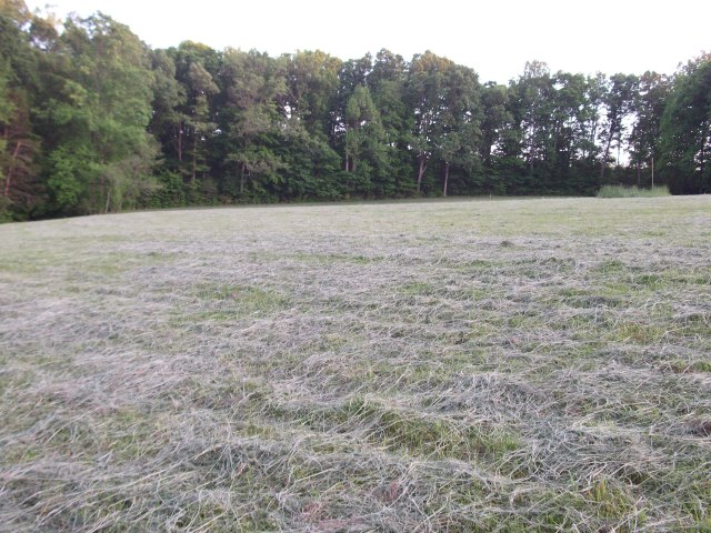High South pasture after being mowed
